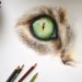 artbehindglass:    my colour pencil drawing of a cat's eye   >^.^