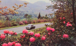 vintagepacificnorthwest:  Oregon highway in the spring