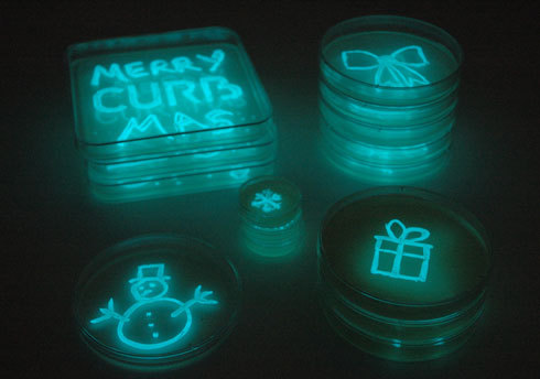 jtotheizzoe:  geneticist:  Merry Christmas! Here's some glowing bacteria for you (via: CURB)  Leave out some coccus and milk for Santa this year! Microbiology for Christmas! :D