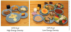 bodydiy:  Energy Density means calories divided by grams/weight. The low energy density foods are also high nutrient dense foods.