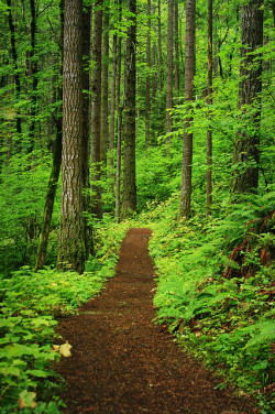 The Path to Peace of Mind ♦ Warrendale, Oregon, USA | by Jacob L Barr