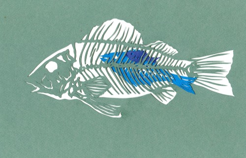 what fish ate, what fish ate, what fish ate….. paper cut, 2013 bone a day   inkhead