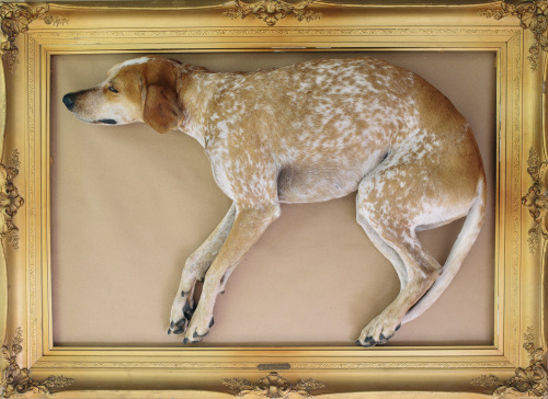 "Rare John Audubon oil painting of ""Redtick Coonhound"""