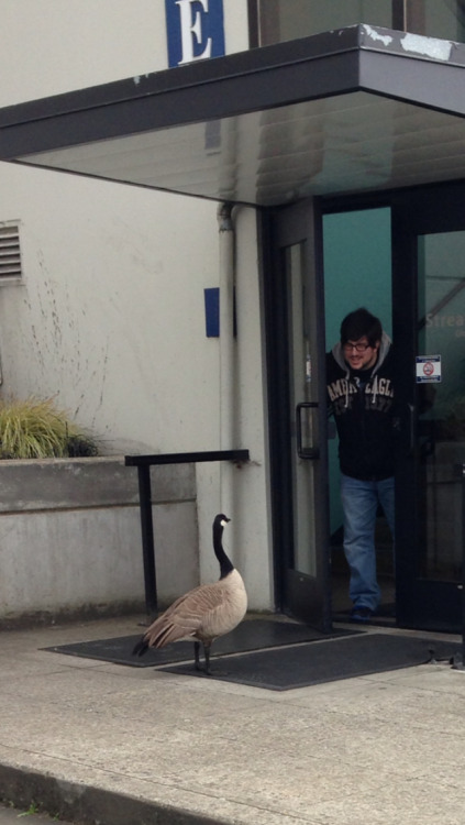 shescoolforkittens:  THESE GODDAMN GEESE GAURD THE DOOR AND WON'T LET PEOPLE IN OR OUT. THEY ARE PROTECTED BY THE FUCKING GOVERNMENT AND THEY KNOW IT. BASTARDS.  My work, guys.
