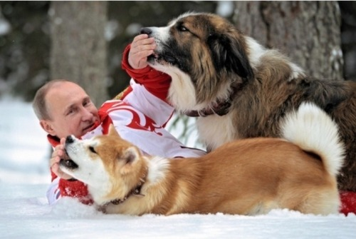 Suddenly, a Vladimir Putin plays with dogs.