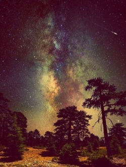 sky landscape trees stars nature nightscape