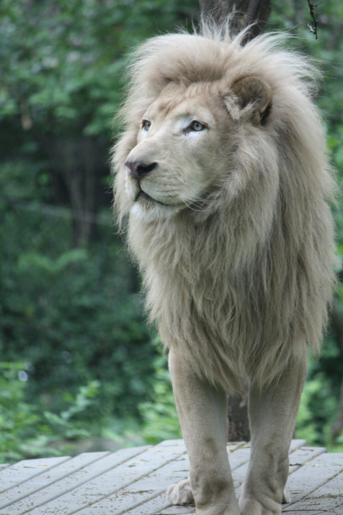 brandonruthafordwilson:  I am the Lion!