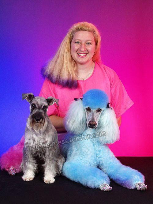 It took me a second to realize that poodle isnt just blue… its also half pink wtf.