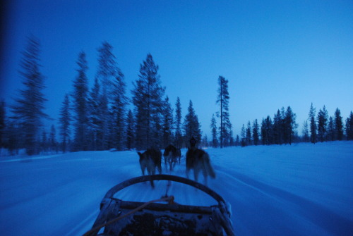 Husky Sledding, The Northern Lights