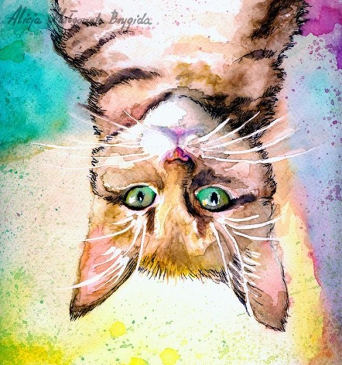 2013-02-21 Fredi, the annoying cat. Annoyingly upside down. [a4 - watercolours] Follow me on facebook? :D https://www.facebook.com/AlicjaMalgorzataBrygidaART