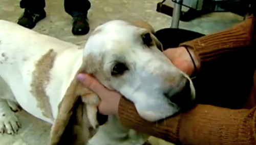 Man reunited with dog a decade later     About 10 years after he lost his basset hound, Ginger, in a divorce, Jamie Carpentier found her in an animal shelter and adopted her for a second time.