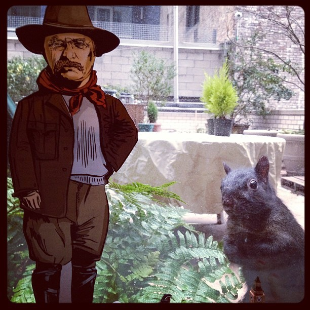 TR vs. squirrel (via Photo by bseitznyc • Instagram)