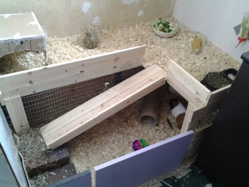 j-blossemblog:  rebekah-cheeseman:  Guinea's cage/hutch/run after!!!!! Almost double the room with out taking up more of my room!!!  Wow, this is fantastic Becky! They must love it!  Thanks em, yh they do, they popcorn up and down the ramp now that I've put some felt on it! I made them some pillows too and they LOVE them!!!! I found pickle sleeping on her side with her head on hers!Do you ever feel like you're going to explode out of love!!!!!! I'm going to name it love poisoning. X)