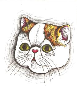Smushy face Ginge cat Drawn using Staedler coloured fineliners Pinky Fang