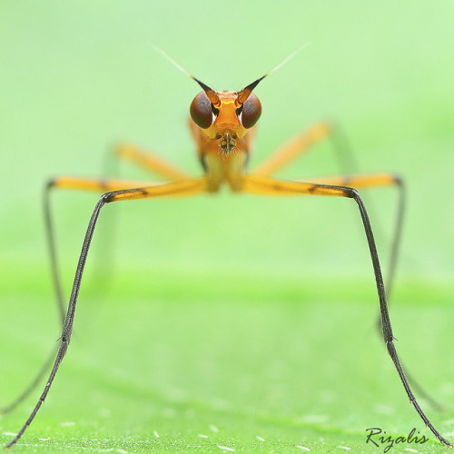 tiny-creatures:  eye to eye by rizalis (malaysian macro team) on Flickr.