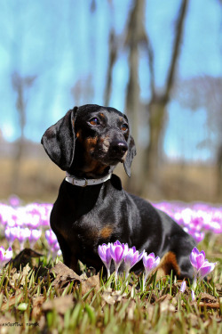 dog-parkk:  oh spring by athenakristiina on Flickr.