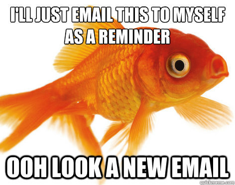 I have the attention spam of a fish