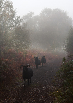 Ba ba black sheep by Theresa Elvin on Flickr.
