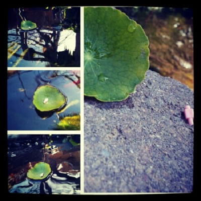 I thought this was pretty cute c;  #random #pond #bored