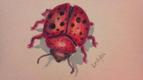 Another watercolor doodle ledyba this time