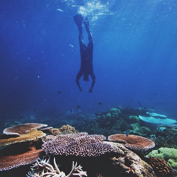 natureconservancy:  Go deep.