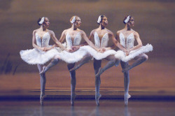 thedailyballet:   nationalballet:  Did you know that ballet dancers often have exceptional peripheral vision? Since the angle of their heads is part of the choreography, dancers often rely on their eye movement alone to see what is going on around them. Artists of the Ballet in Swan Lake. Photo by David Cooper.  We don't normally add our own commentary to pictures but I wanted you guys to know that this is a really important picture to me and hopefully more of you. As a person of color in the ballet world, it's easy to lose hope about ever getting into a company. This picture, especially in a ballet like Swan Lake, really breaks down barriers and gives hope to me and I'm sure many others.