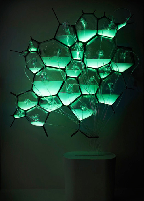 "jtotheizzoe:  Here's A Light Fixture That Runs On Bacteria As we phase out incandescent lights for compact fluorescents, we save energy but take the risk of mercury pollution (there's heavy metals galore in CFLs). Whatf if we could light our homes with biology? Similar to the Glowing Plant project from earlier this week, here's Philips concept for a microbial lamp powered by the chemistry of biological luminescence. It's part of Philips' ""Microbial Home"" future concept, which also includes urban beehives and bacterial waste recycling. You can get off the grid, and onto the petri dish. (via Co.Design)"