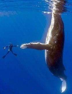 nice to meet u im whale