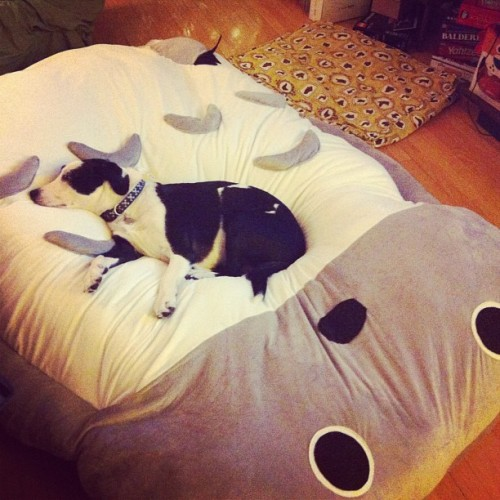 Finn loves his Totoro bed.