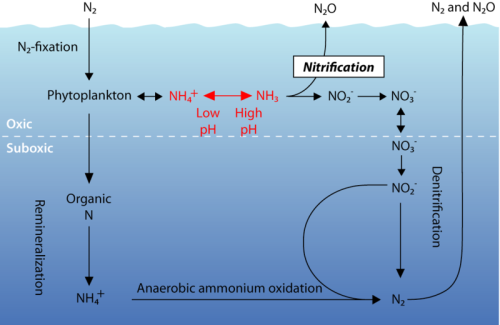 Acid Oceans and Nitrogen Cycles       via news.discovery.com     You know…is all about Oceans and passion for Diving…