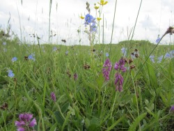 flowers meadow nature nature photography grassland wild flowers