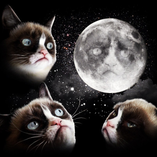 Three Grumpy Cat Moon T-Shirt Scott Beale, laughingsquid.com Three Grumpy Cat Moon T-Shirt, a wonderful update on the now classic Three Wolf Moon t-shirt.via Bonnie Burton