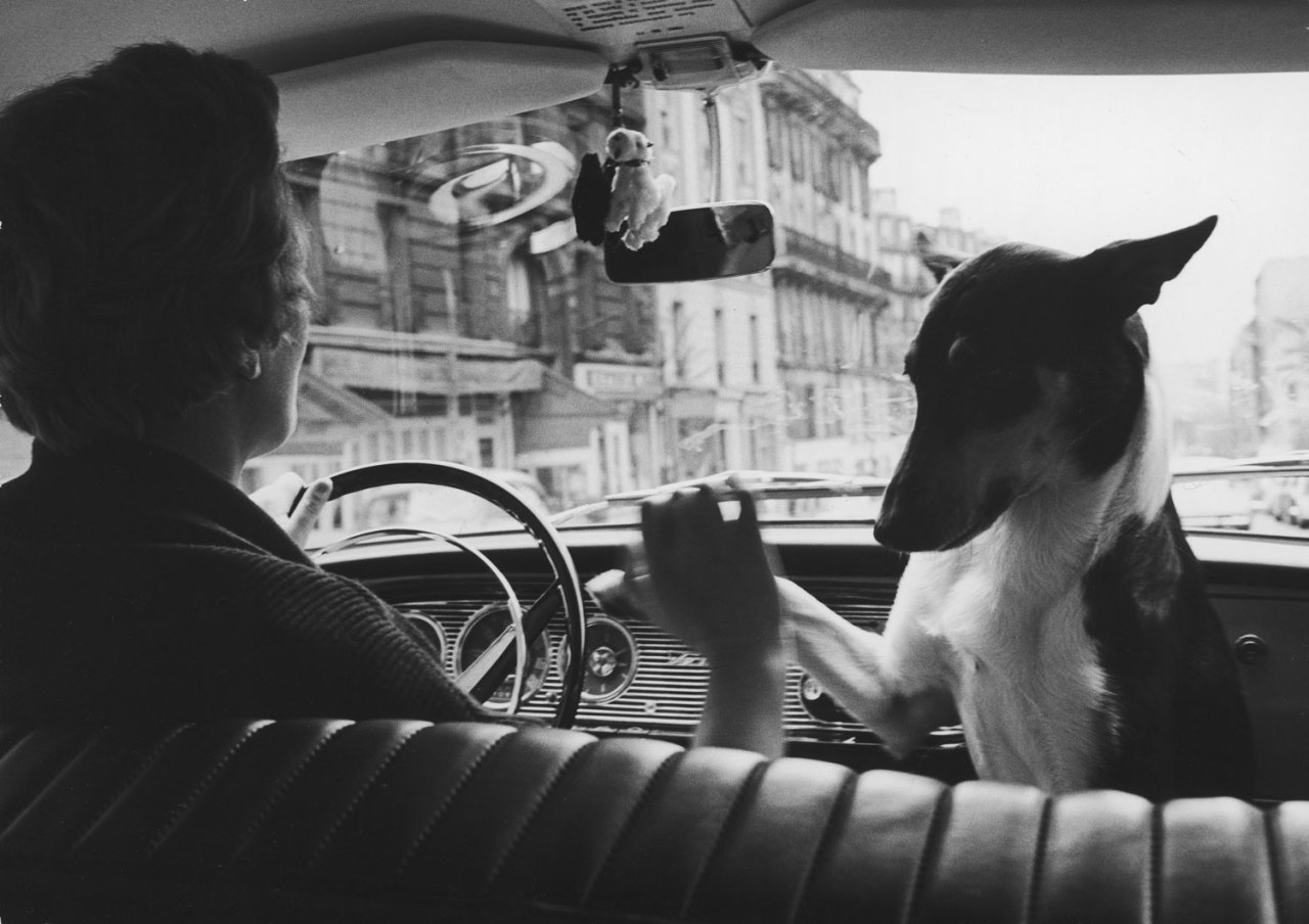 A taxi driver shares her front seat with her pet dog in Paris.