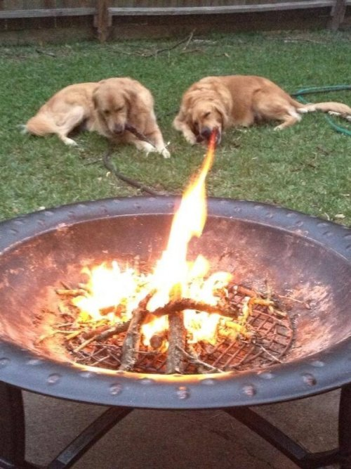 niknak79:  Fire breathing dog