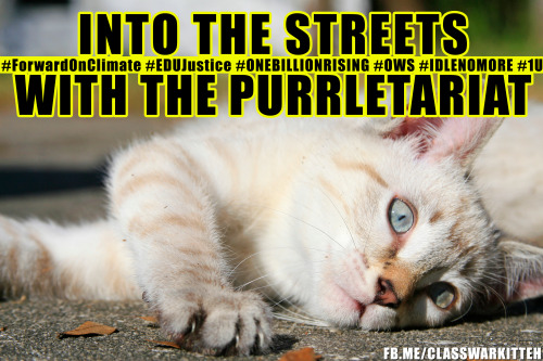 Today in Class War Kitteh history: over 40,000 members of the purrletariat took on a sitting President over his complete disregard for the future of all kittens. Thank you everyone who attended. It's been a busy year for all of us. As state budgets heat up it's going to get even busier(I can haz capitol occupation?). Keep up the organizing in your hometowns and be sure to send us kittens who support social justice<3