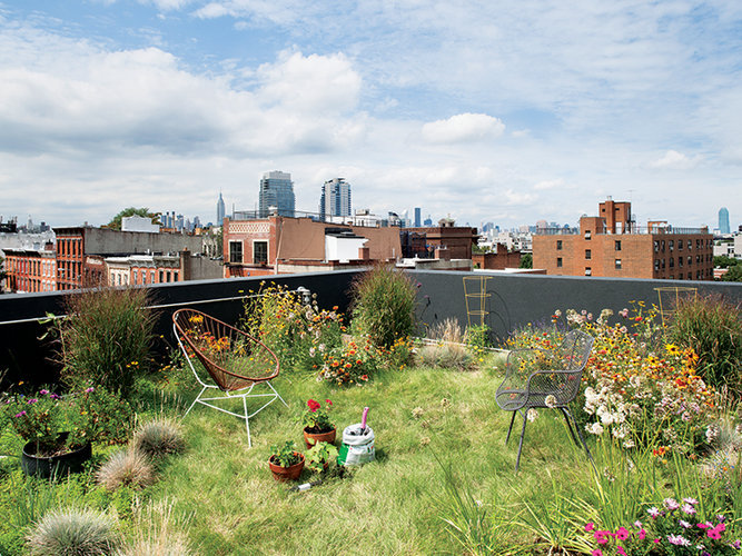 mildrose:  lonehands:   174 GRAND, BROOKLYN NEW YORK    The green roof has approximately eight inches of soil and absorbs rainwater runoff. (via Peek Inside 8 Of The World's Greenest Homes )    woah this is amazing