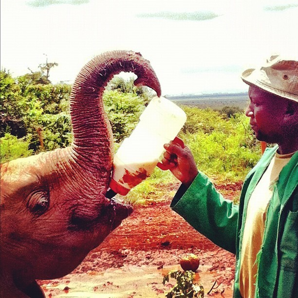 David Sheldrick ting