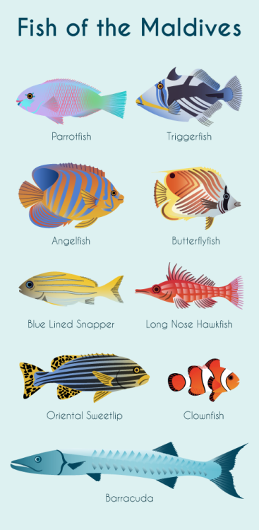 Illustration of some of the most popular fish in the Maldives by Kuoni holidays.