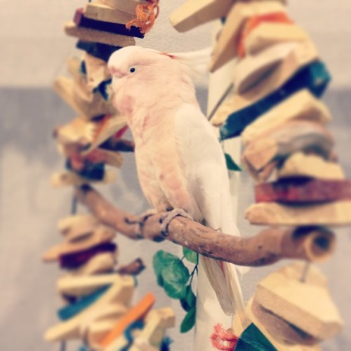 Okay y'all here comes #parrot #spam …er… #bird spam anyway.