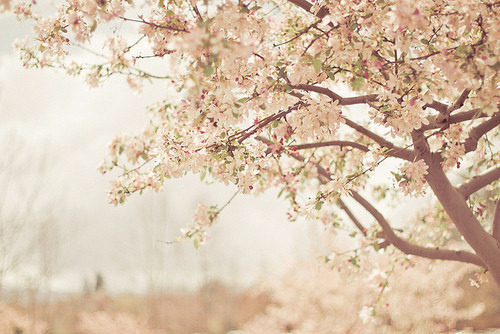 (2) Tumblr on We Heart It - http://weheartit.com/entry/59343269/via/scorpie   Hearted from: http://brickflowers.tumblr.com/post/48692901513