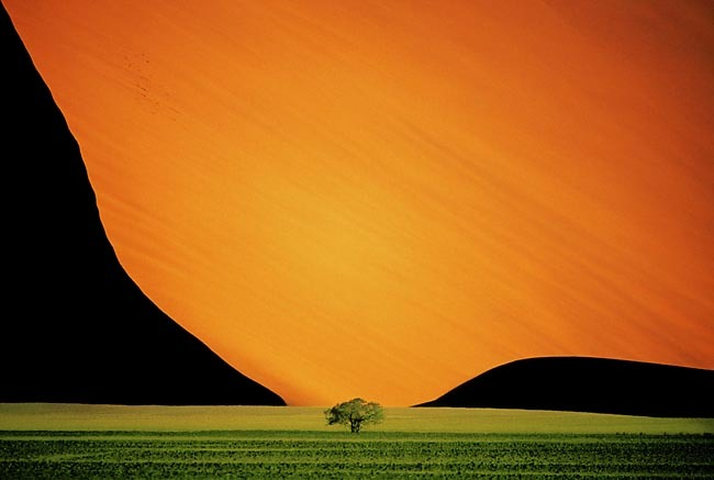 This picture is burning on #Facebookhttps://www.facebook.com/PhotographyOfficePete Turner Sandune and Tree, 1995