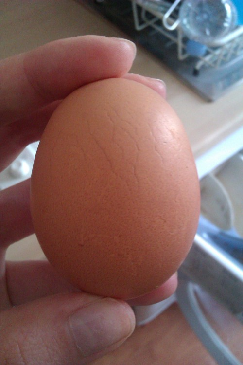 If you have stretch marks and you're ever sad about them, remember eggs get stretch marks too and they're still yummy.