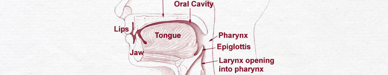 As you read this, you are subtly moving the muscles in your tongue and throat associated with speaking the same words aloud. This is called subvocalization. It is largely undetectable without the aid of machines, even by the subjects themselves, and impossible to fully repress. Subvocalization is thought to occur in order to reduce cognitive load while reading or thinking, and allows the brain to take in and process information more naturally and more effectively. Since it is possible to detect and interpret these signals electronically, projects are currently underway to create silent forms of communication, where participants need only think about speaking to communicate.