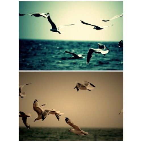 Fly #justposting #birds #favorites