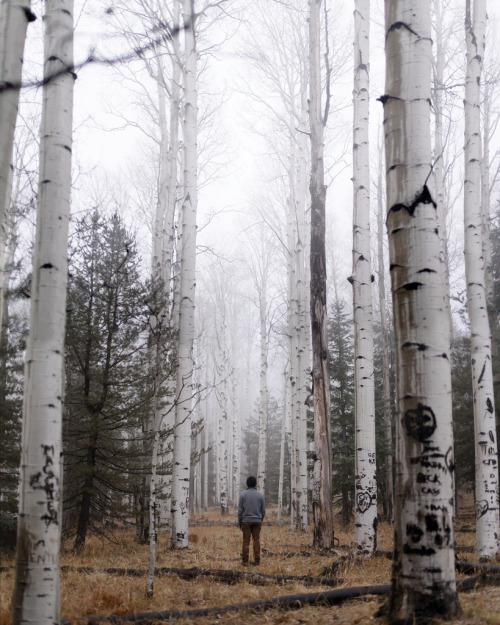 thenakedbrowneye:  Untitled. (by Evan J Atwood)