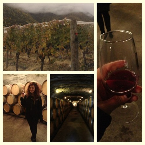 We spent yesterday morning wine touring and tasting. #electratakesnz #wine #redwine #winetour #gibbstonwinery #gibbston #grapes