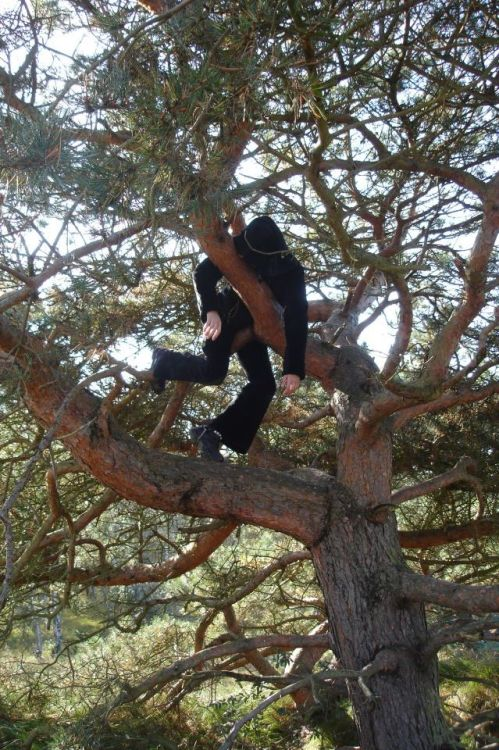 "Steffi submitted this photo with the comment ""My friend up a tree on a wonderful island called Hiddensee."" I found this ""wonderful island"" on wikipedia and I noticed that it didn't mention the local goths up trees in the Flora and Fauna section. It's probably better that way because we don't want the island overrun by tourists wanting to see this obviously shy variety of the species, unless, of course, they start up a sanctuary for them, which would be apt because there are about 50 goth night clubs in the world called ""Sanctuary"".  This goth is very high up the tree and in an uncomfortable looking pose.  I doubt that he/she is smiling.  It's a sunny day but they're well covered from the sun's rays.  I can't really see what they're wearing but it's definitely all black and that's goth enough for me. 4.4 out of 5 - As my mate* Ian Astbury from The Cult would say if he ever visited this island, ""I'm sure in Hiddensee you'll find the goth sanctuary"". Sorry. * Not actually my mate"