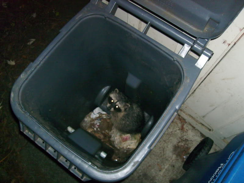 me in a rubbish bin