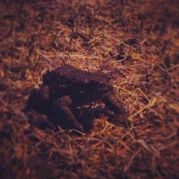 54 weeks ago I posted a picture of a toad here! Almost a year later I met one again!