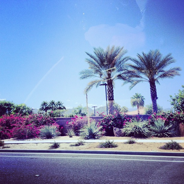 Made it to the desert #coachella